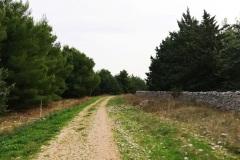 sentiero-9