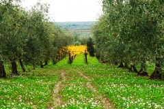 località-Sant-Andrea-1