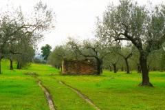località-Sant-Andrea-2