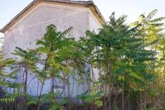 casa-inglobata-da-vegetazione