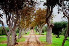11_località-Stinco-Casa-Bruno