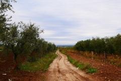 13_località-Quadroni-di-san-Giovanni