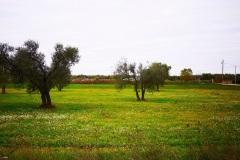 14_località-Quadroni-di-san-Giovanni