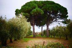 50_località-SantAndrea